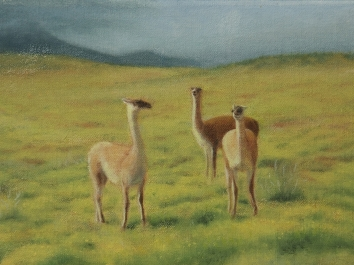 Patagonia Study 7