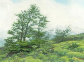 Patagonia - Whispering Trees